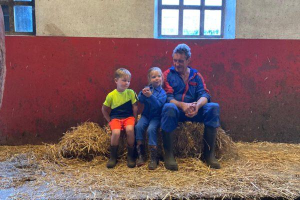 Koeien kijken in de stal