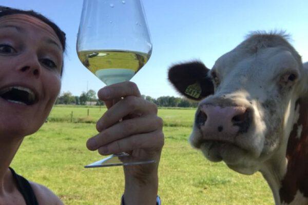 Wijntje met koeien drinken